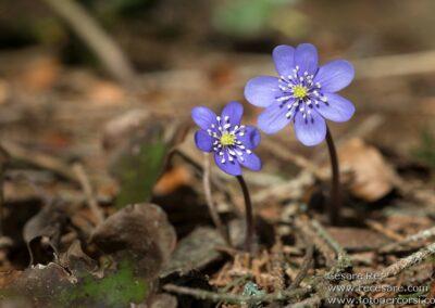 Fotografare i fiori cesare re