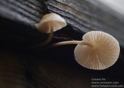Funghi macro foto