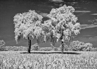 Infrarosso paesaggio alberi Cesare Re