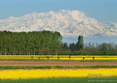 Monte Rosa campi colza