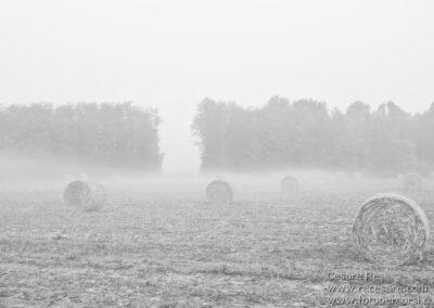 Nebbia campi parco ticino