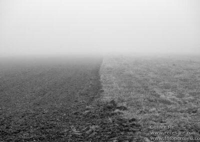 Nebbia campo parco ticino