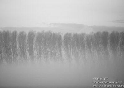 alberi nebbia cesare re