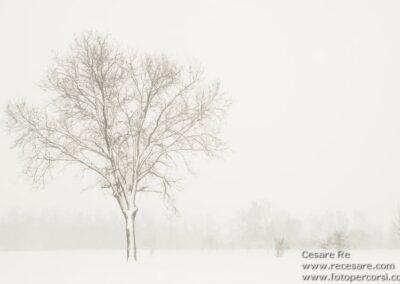 alberi parco ticino