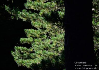 alberi val furva parco stelvio