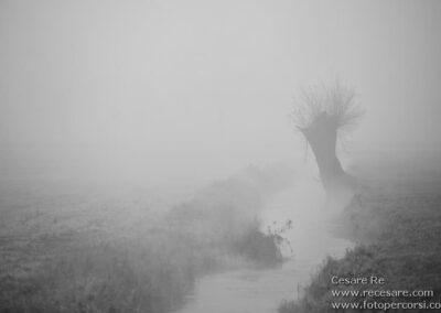 albero nebbia parco ticino