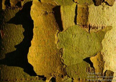 corteccia texture legno