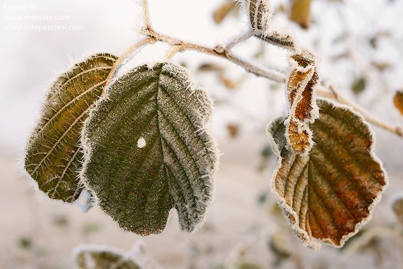 foglie gelate primo piano
