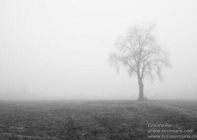 fotografare la nebbia cesare re