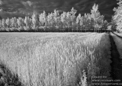 infrarosso paesaggio campi pioppeto