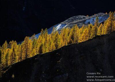 larici ghiacciaio belvedere cesare re