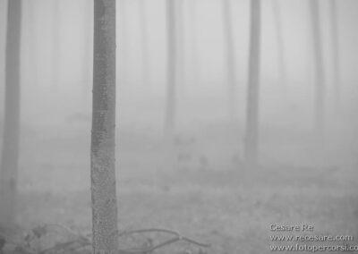 nebbia pioppi cesare re