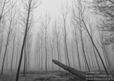 pioppeto nebbia
