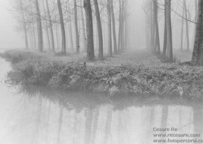 pioppi acqua canale nebbia