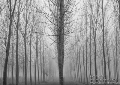 pioppi nebbia cesare re