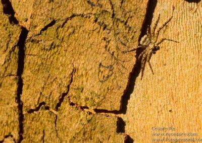 texture ragno legno