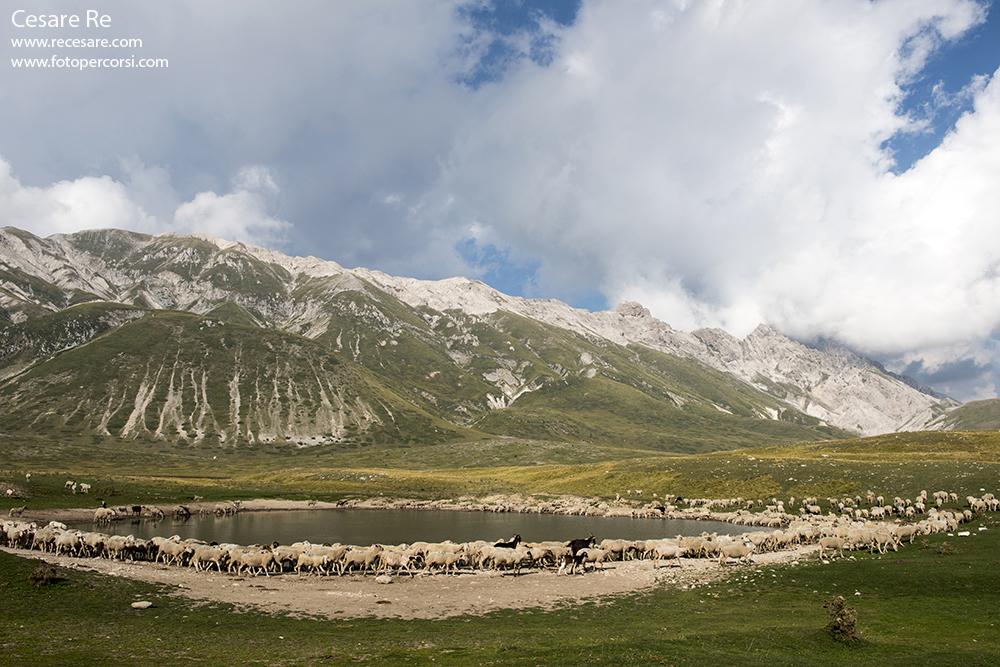Pecore a Campo Imperatore